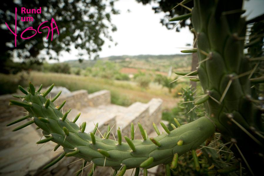 Yogaretreat Mallorca_Rundum-yoga.de_3