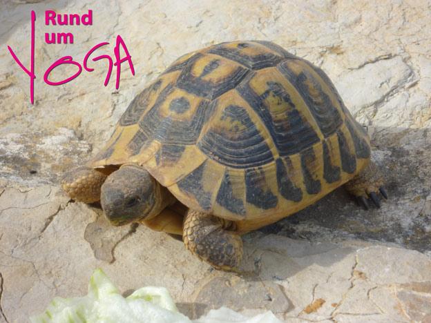 Yogaretreat Mallorca_Rundum-yoga.de_5
